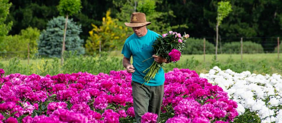 De las sierras de Tandil al mundo: Flowery Hills