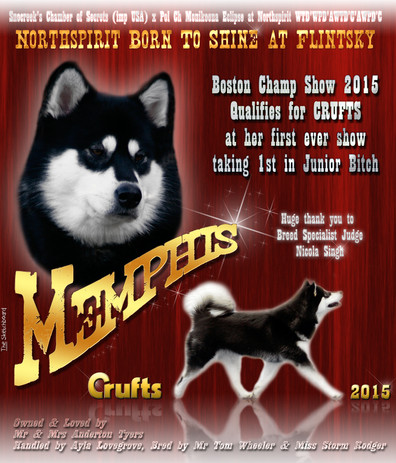 memphis crufts 2015.jpg