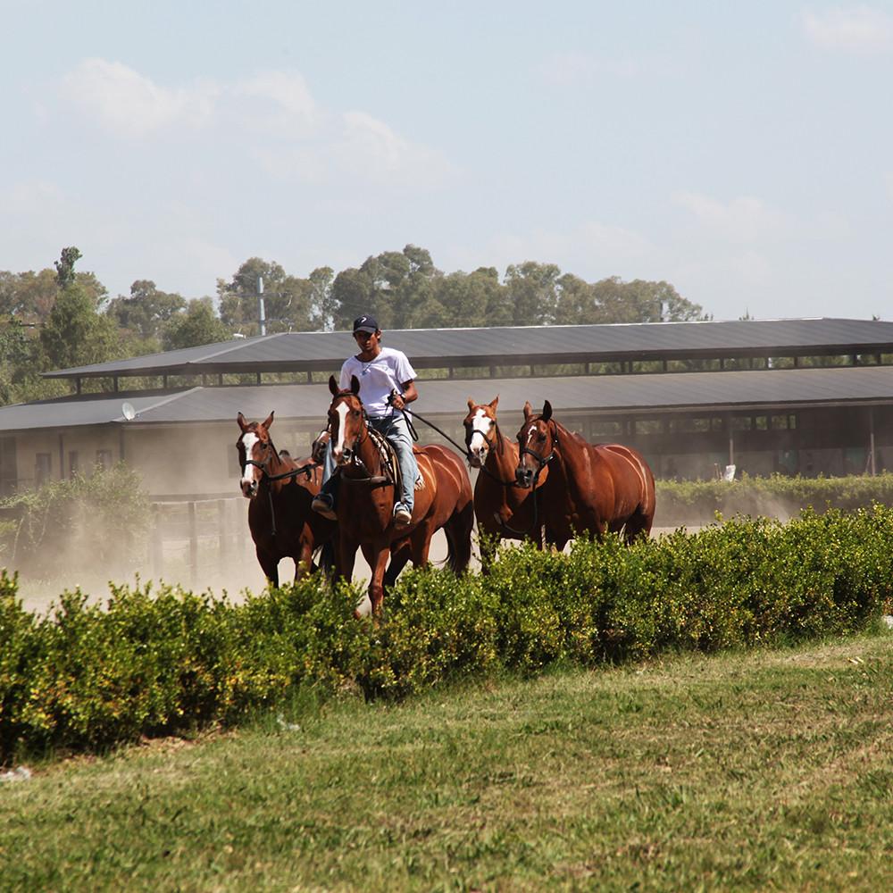1000 x 1000 horses 2.jpg