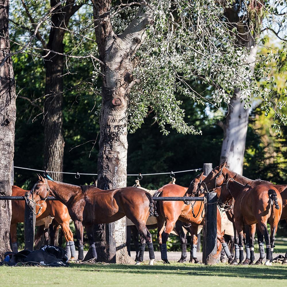 1000 x 1000 horses 4.jpg