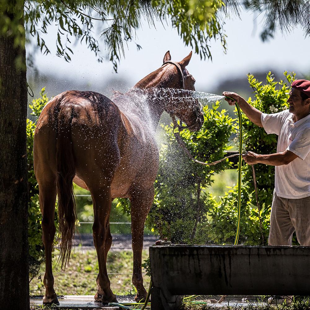 1000 x 1000 horses 5.jpg
