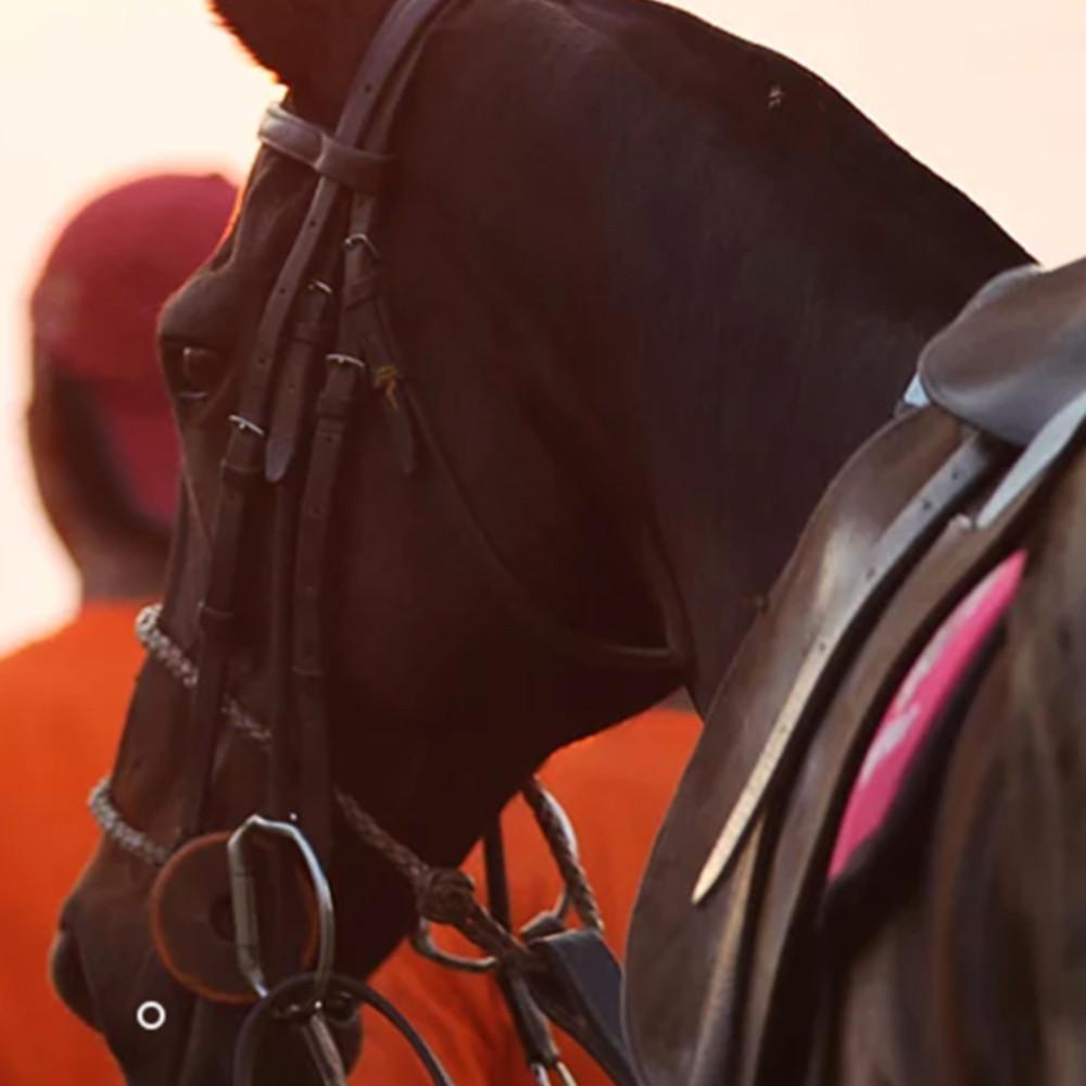 1000 x 1000 horses.jpg