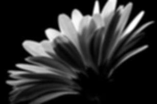 IMG_3592-2 bw.jpg