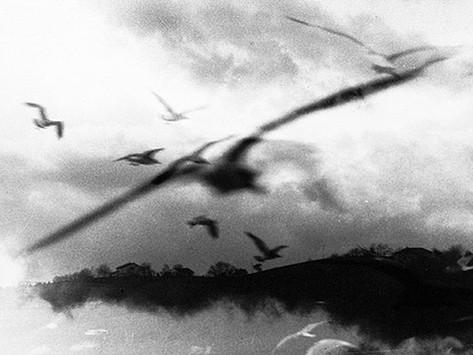 Ali per volare - Angela Articoni