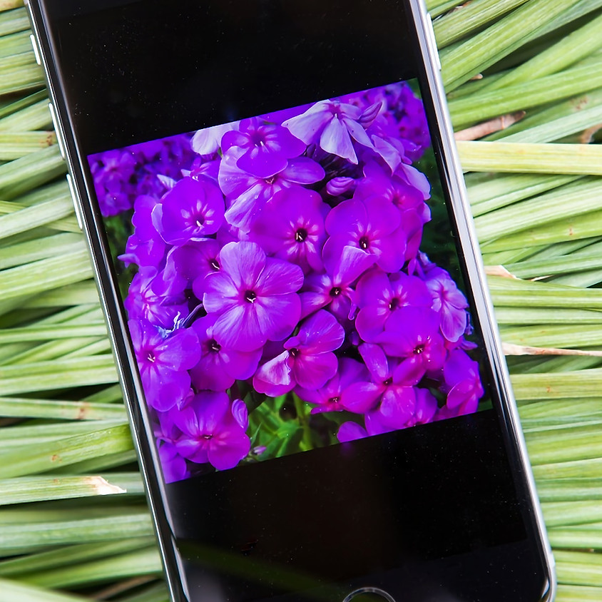 Learning Your Smart Phone Camera by Elizabeth Larson (1)