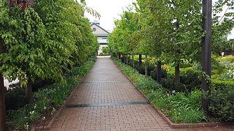 View of Hornbeam Walk.jpg