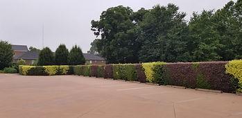 View of Mosaic Hedge.jpg