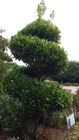 pearl fryar topiary (2).jpg