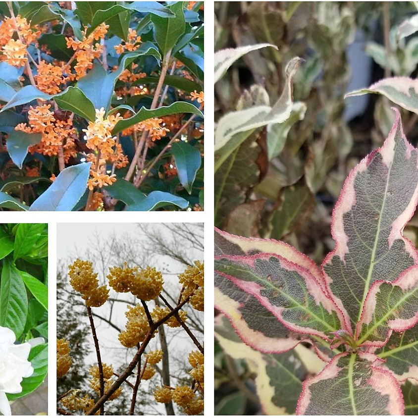 """""""Best Shrubs"""" by Adrienne Roethling, Director of Curation and Mission Delivery"""
