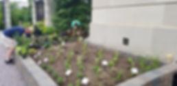 DC Planting.jpg