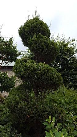 pearl fryar topiary.jpg
