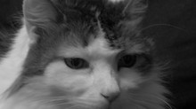 The Spiteful Cat