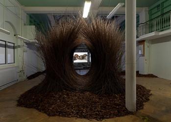 """""""Natural Selection"""", l'exposition sur les oiseaux designer et les voleurs d'oeufs"""