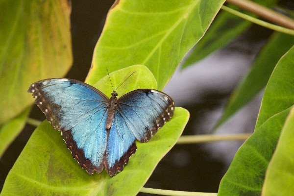 A blue butterfly on a green leaf represents embracing change