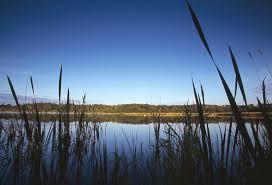 Natural reserve in Lochwinnoch