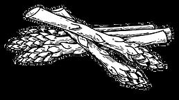 asparagus illustration sketch.png