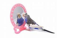 budgie mirror.jpg