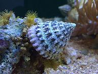 turbo snail.jpg