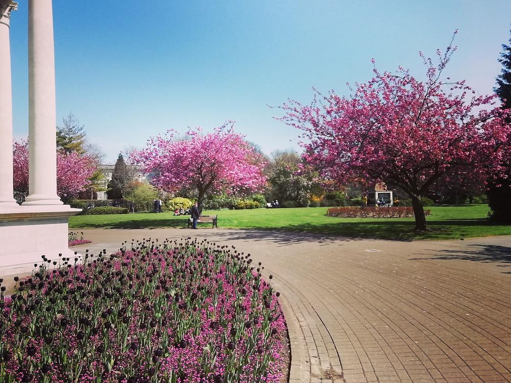 Alexandra Gardens, Cathays Park, Cardiff, in full bloom in Spring