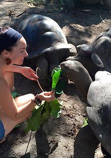 Seychelles, Tortoise