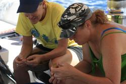 Sorting through seaweed sample