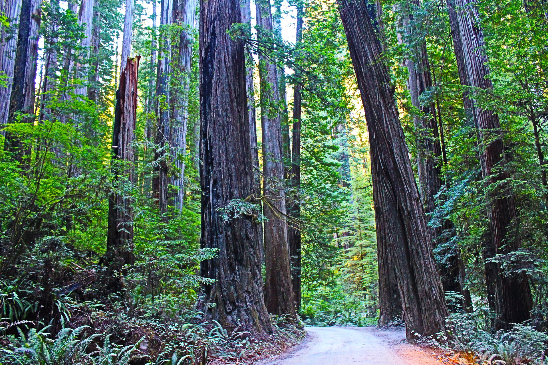 redwood-national-park-2138582_1920