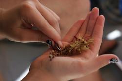 Seaweed sample, plastic research