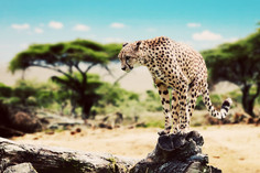 Into the Wild - A Guide for Chic Safaris in Tanzania and Namibia