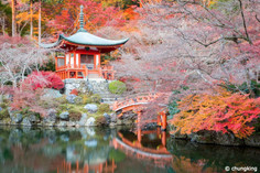 The Hot Colours of Autumn Foliage