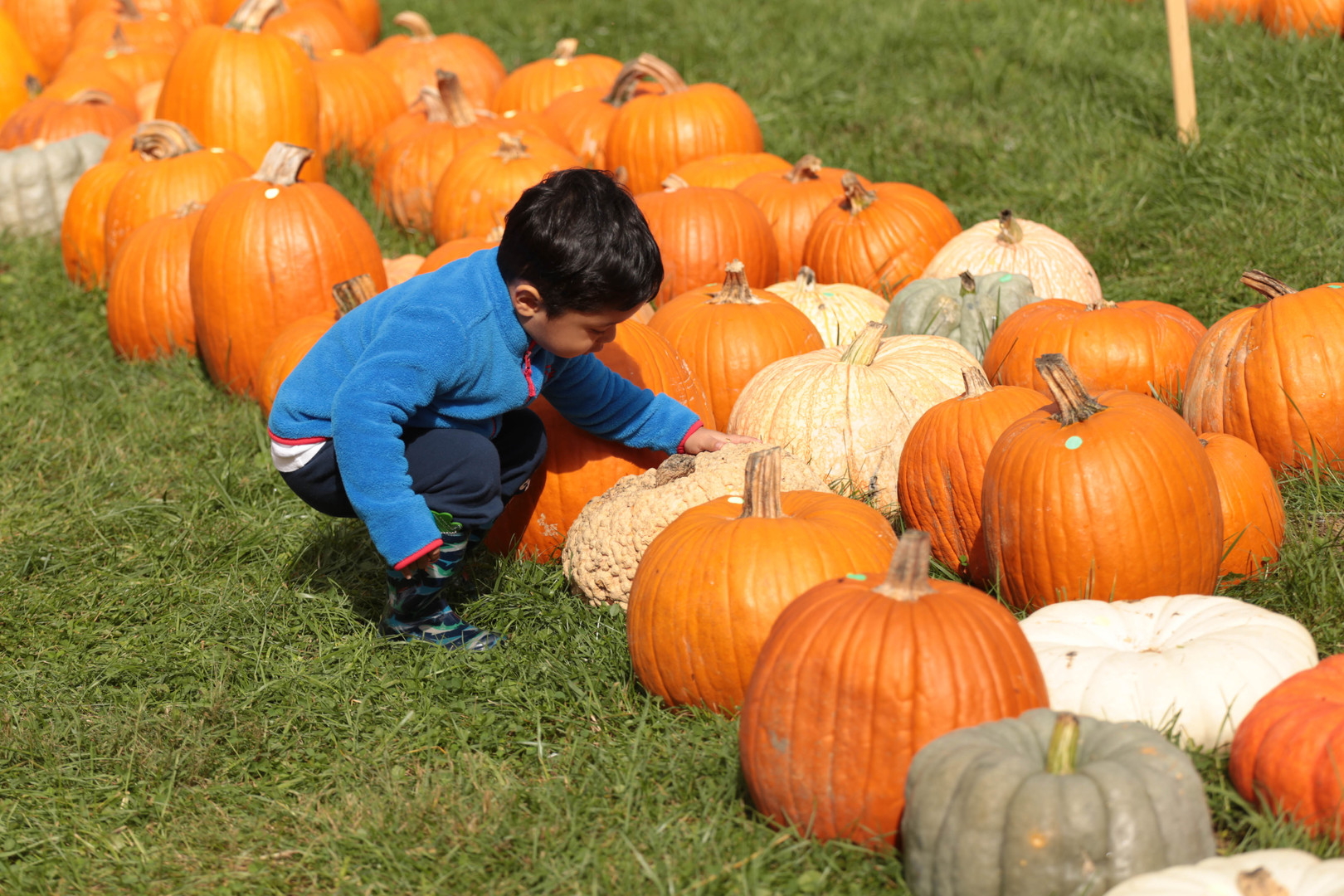 PumpkinPatch2018 (29 of 126).jpg
