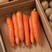 Bolero - Carrot