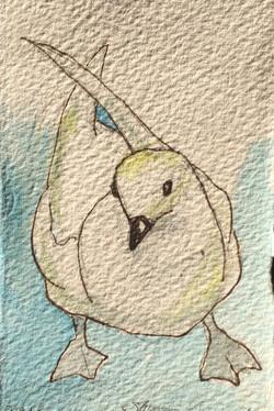 Bird on Polar Pioneer