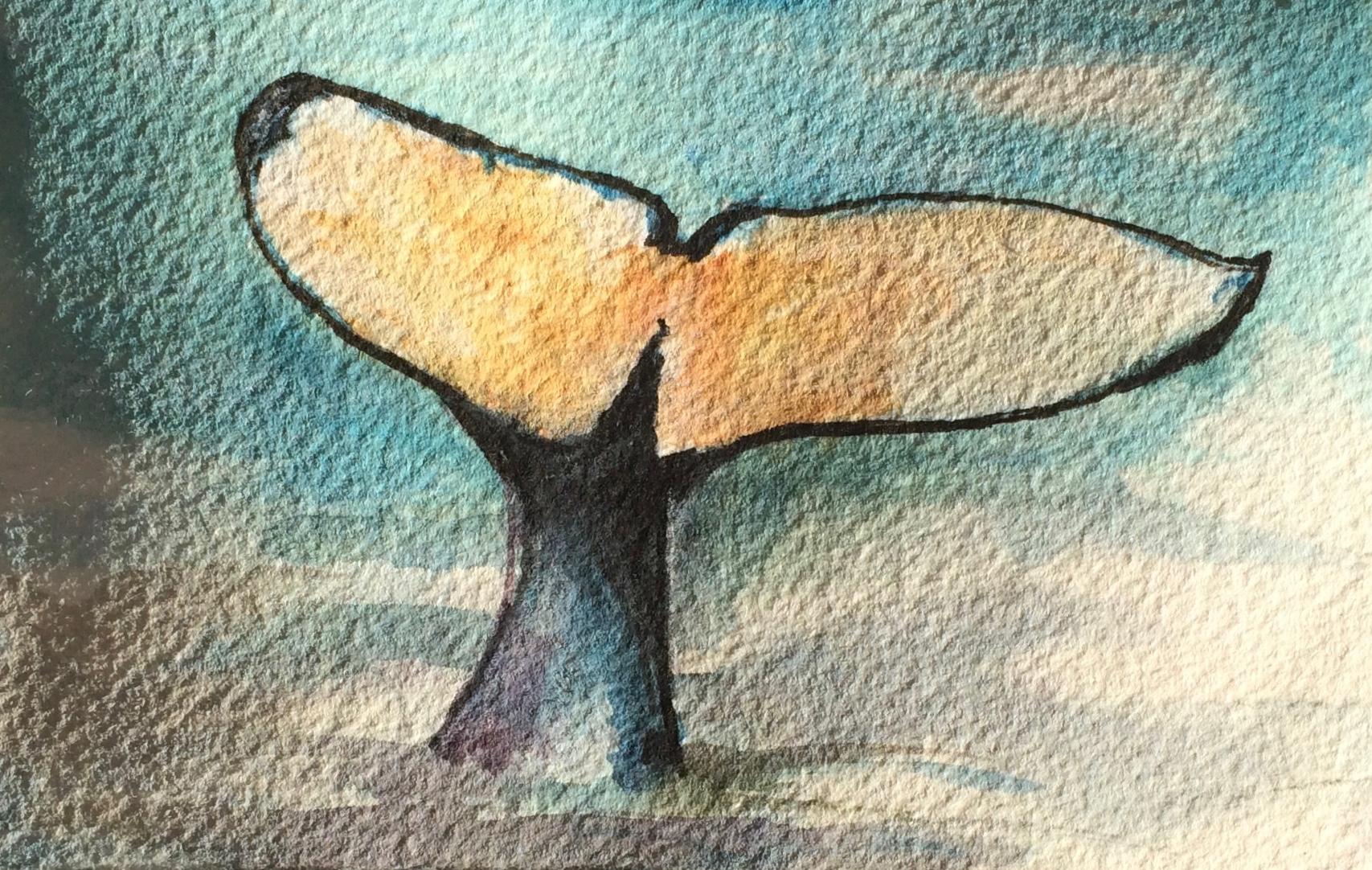 Antarctic Whale