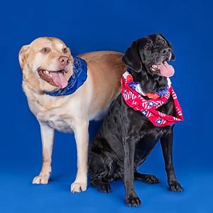 Patriotic Pups Sam & Sully