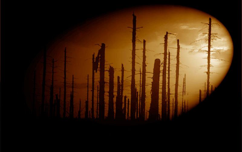 hforest.jpg