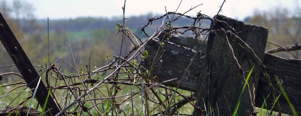 Barbed Wire and Wood