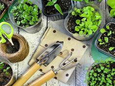 Recomendaciones para hacer almácigos de hortalizas