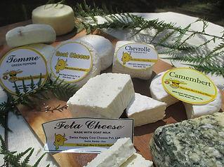 Cheese, india, happy cow cheese, goat cheese, cow cheese, buffalo cheese, swiss cheese, camembert, brie, greek feta, artisanal goat cheese, ricotta, Barbara schwarzfischer, goa, cheese factory, cheese manufacture, cheese wholesale, cheese retail, natural cheese, marna, siolim, maharashtra