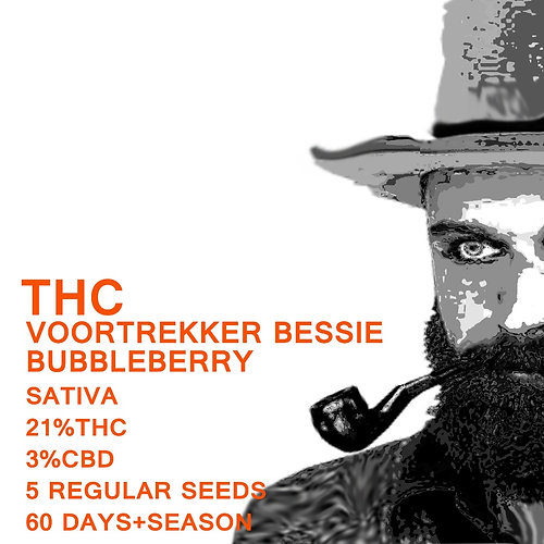 Voortrekker Bessie Bubbleberry - SeedWorx Laboratories