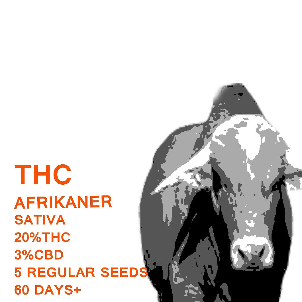 Afrikaner - SeedWorx Laboratories
