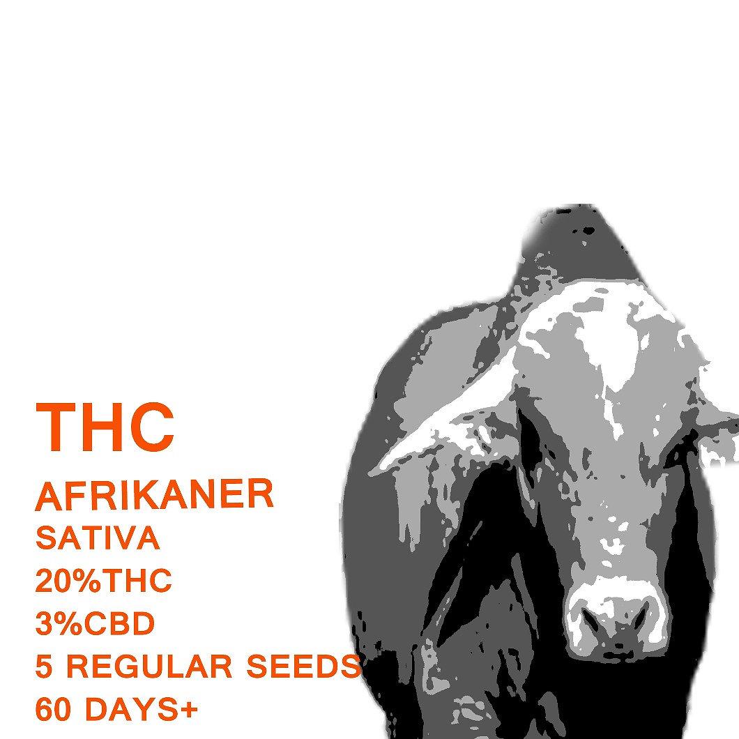Afrikaner - SeedWorx Laboratories