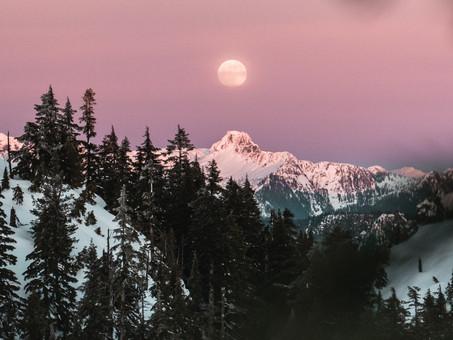 """Aromachologie - Zoom sur le MYRTE VERT & synergie aroma """"je deplace des montagnes !"""""""