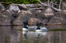 Lake Loons, July 12, 2021