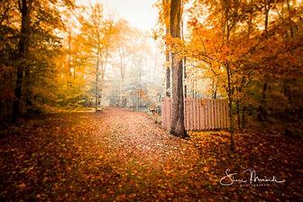 Autumn Driveway October 2018.jpg