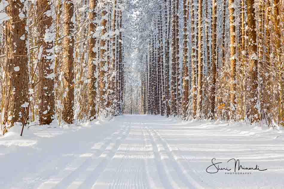 Kinsmen Park Ski Trails 2016