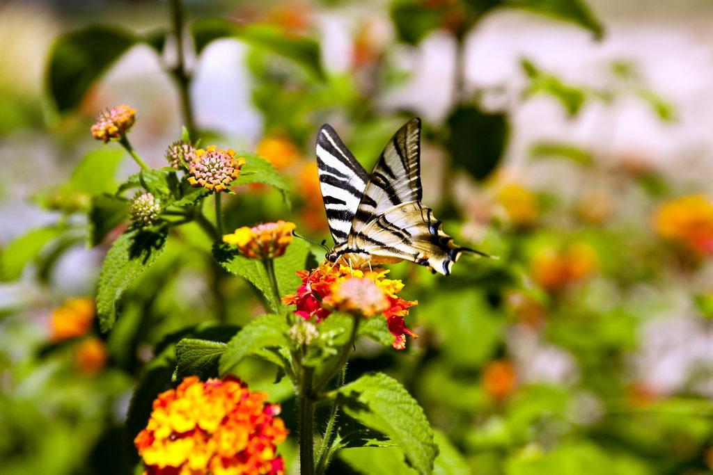 Mariposa en las flores del jardín