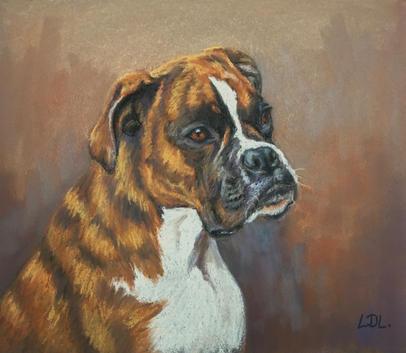 Boxer Dog - Pastel Portrait