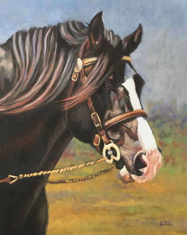 Welsh Cob Stallion - pastel painting