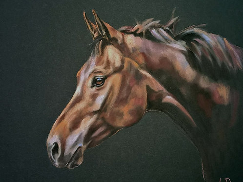 Bay Thoroughbred Horse Pastel Painting Portrait