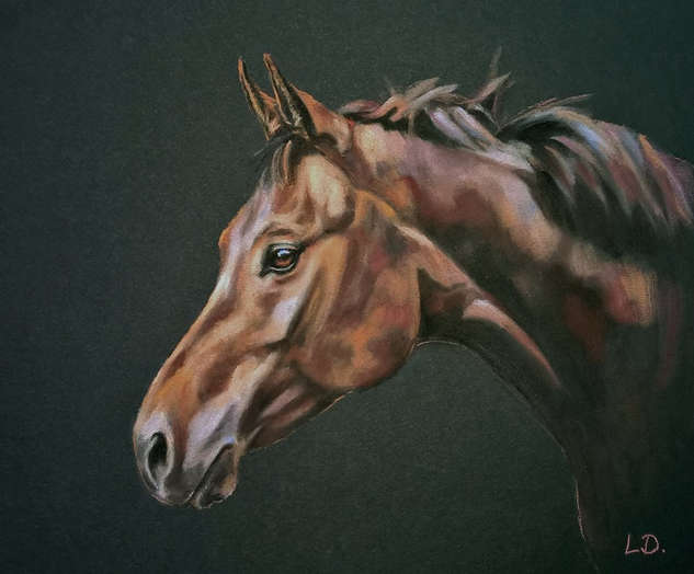 Bay Horse Portrait